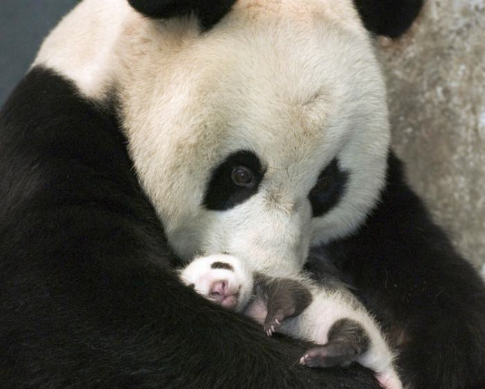 These Baby Animals Are So Cute, They'll Make You Go Awww