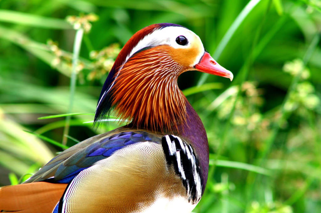 19 Of The World S Most Colorful Birds