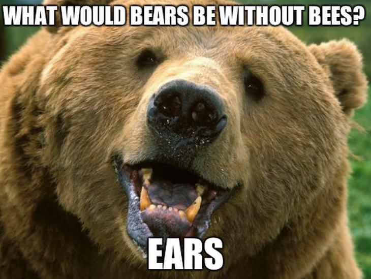 animal puns: bear
