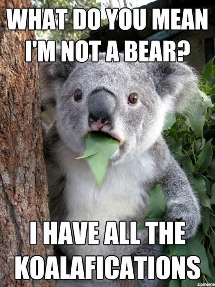 animal puns: Koala