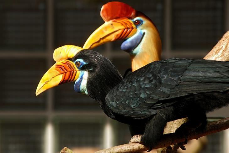 15 Beautiful and Rare Birds | Nature