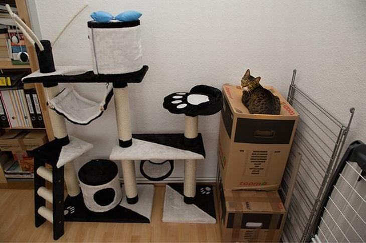 cat logic funny photos