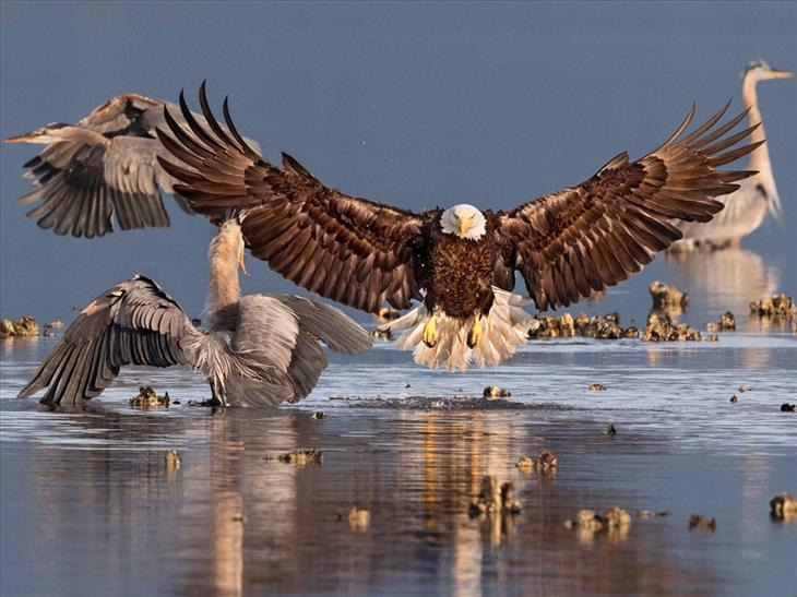 bird-photography-awards