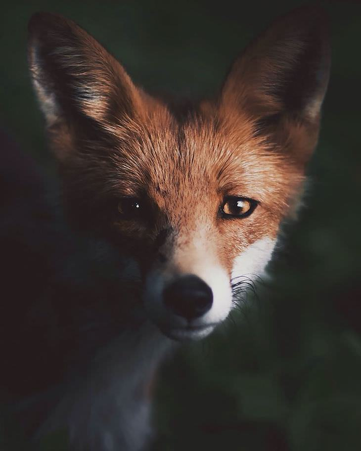 Finnish photography, wild animals