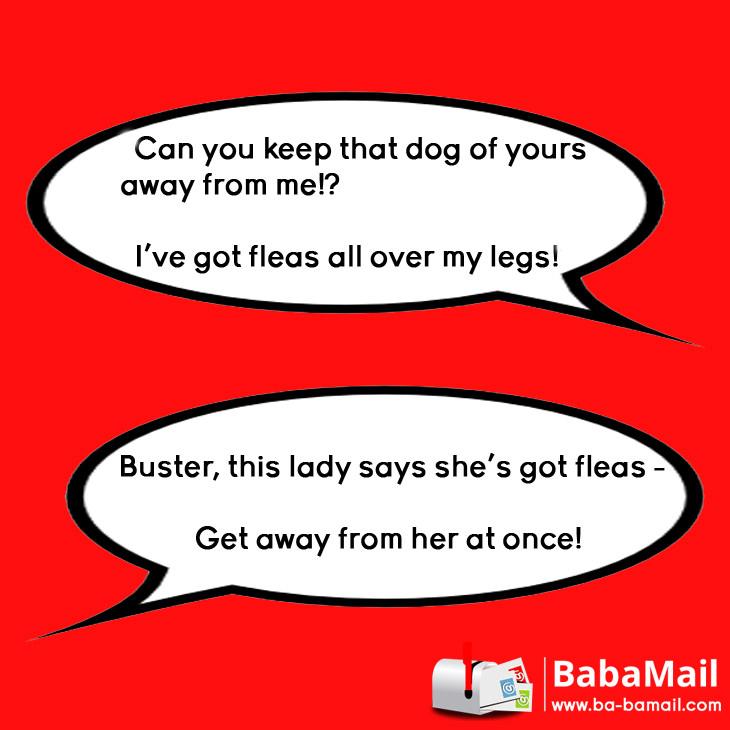 say-what-jokes-phrases
