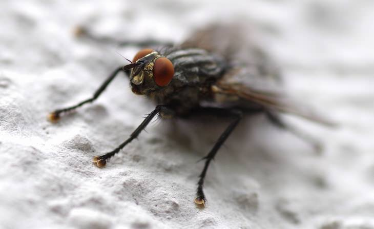 A Fly-Free Home Is As Easy As 10 Simple Steps   Tips, Life Hacks and DIY