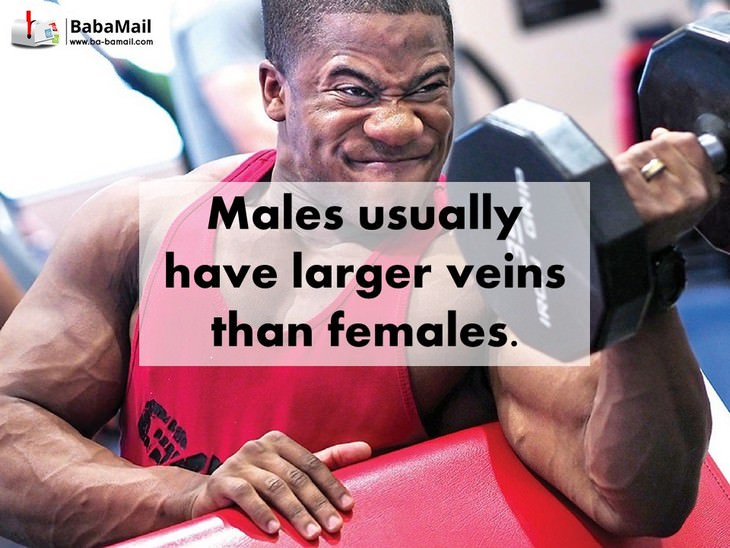males, females, biology, facts