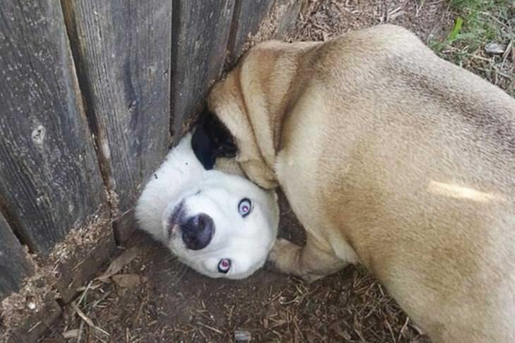 dogs, cute, fences