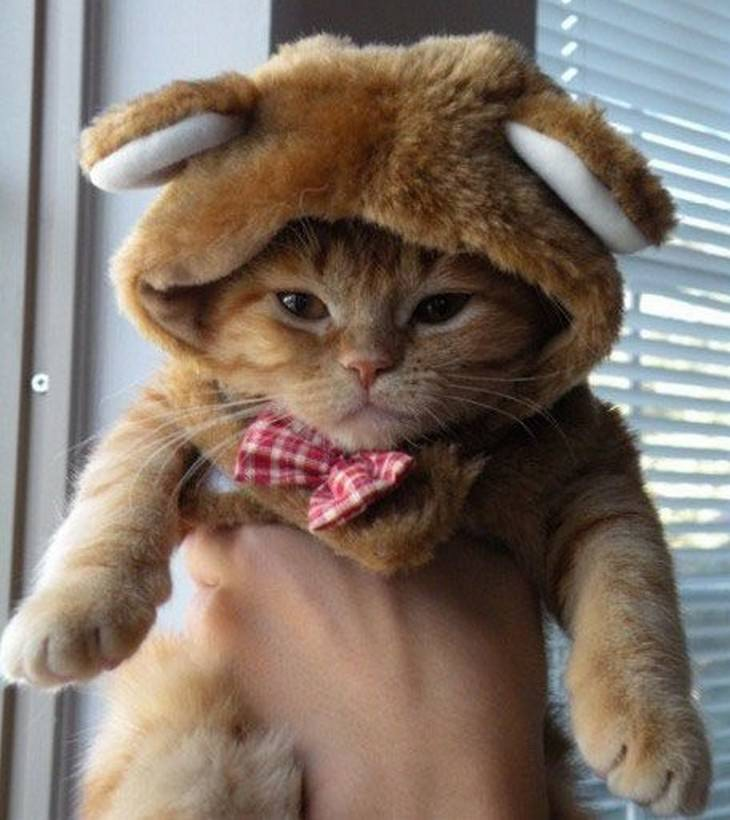 kittens, dressed up, cute