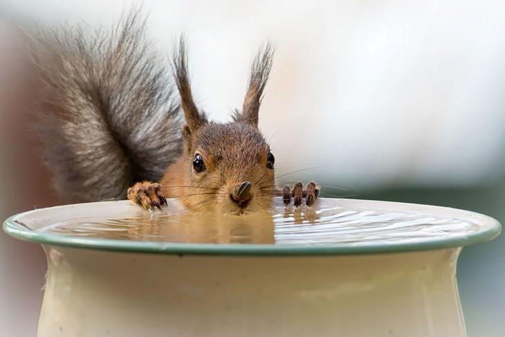 cute, squirrels