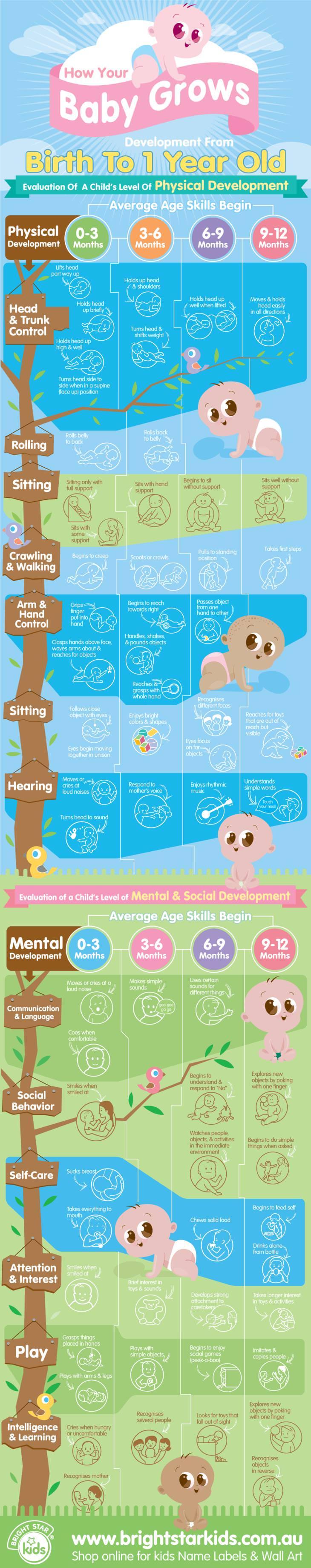 Baby-infographic