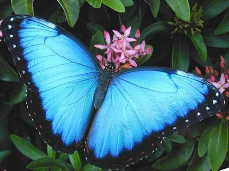 23 Stunningly Beautiful and Rare Butterflies | Nature