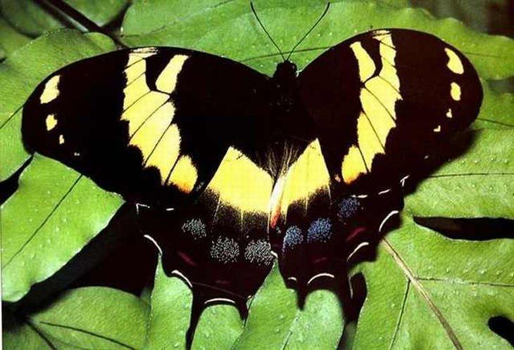 23 Stunningly Beautiful and Rare Butterflies | Nature