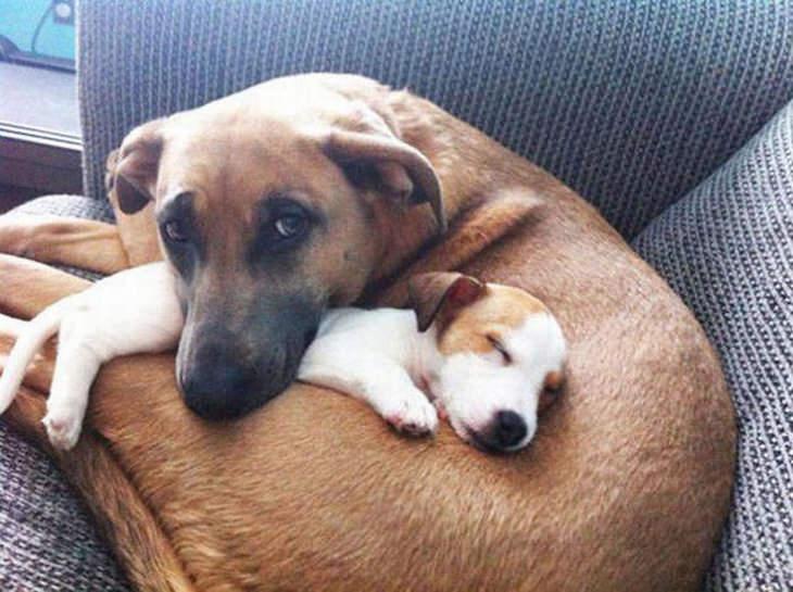 dogs-in-love