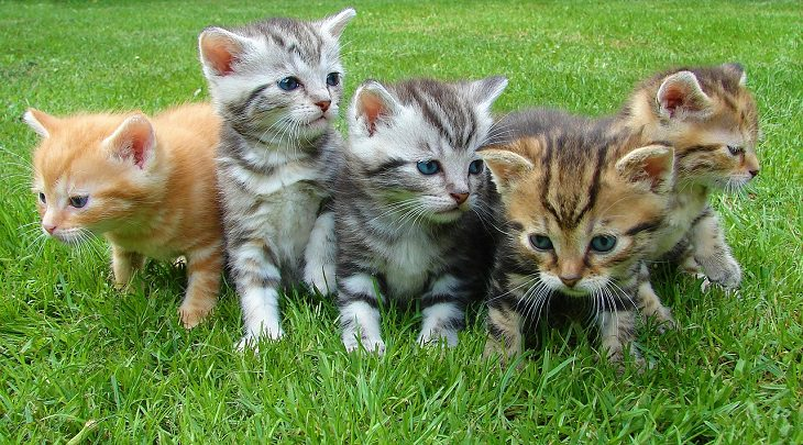 cat and kitten facts - group of cute kittens playing together