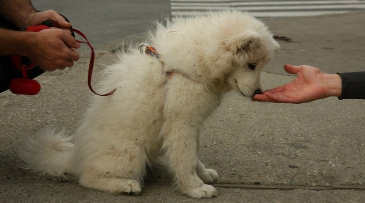 dog attacks, prevent, guide