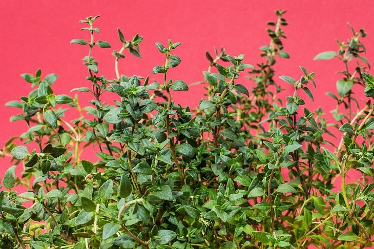 Healthy - Herbs - Grow - Home
