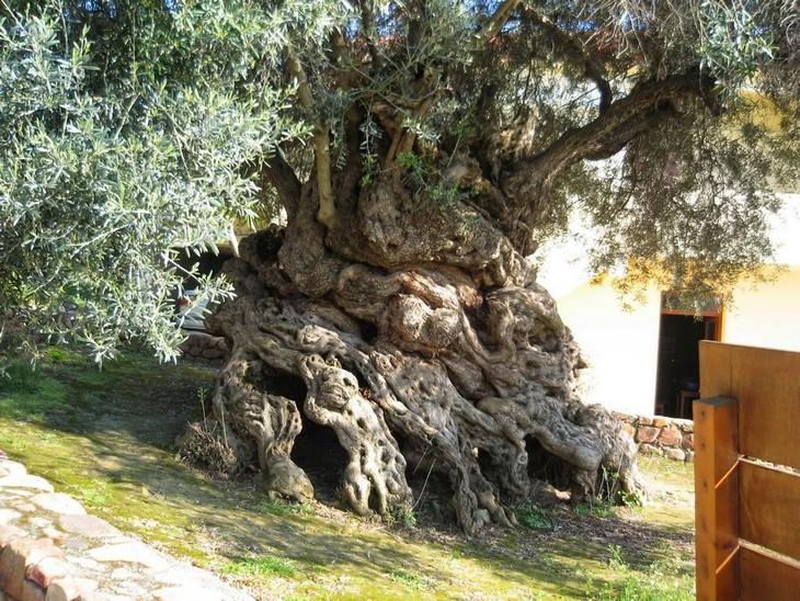 trees, beautiful, ancient