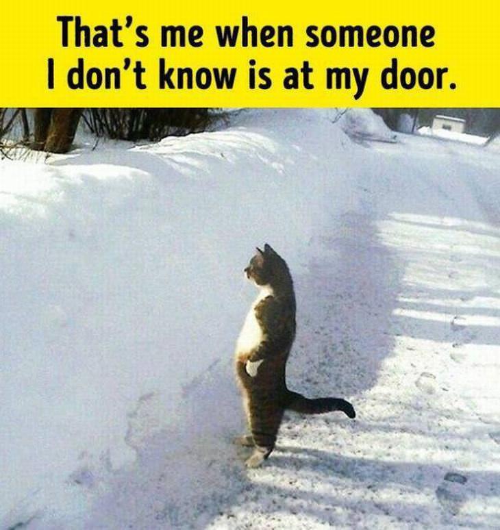 animals act like humans