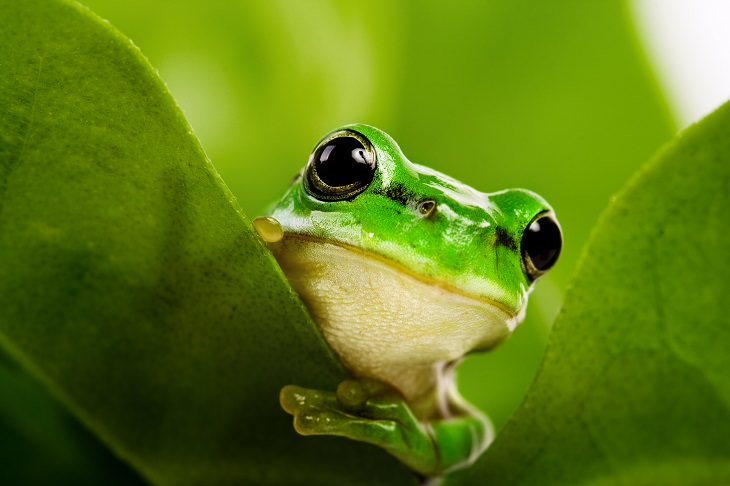 short inspirational story: the group of frogs