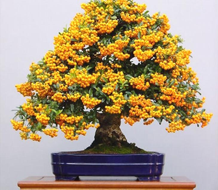 A Guide To Growing Bonsai Fruit Trees
