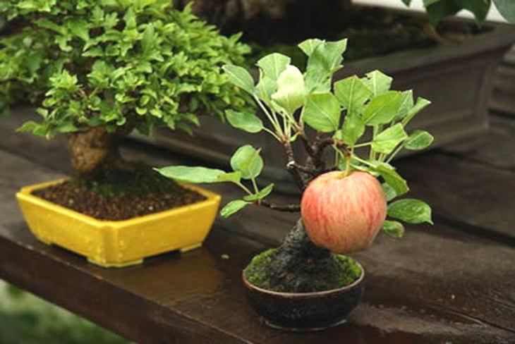 fruit-bonsai