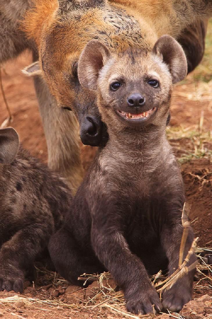 Smiling - Happy - Animals