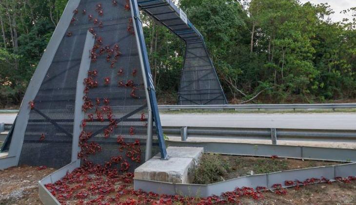 animal-bridges