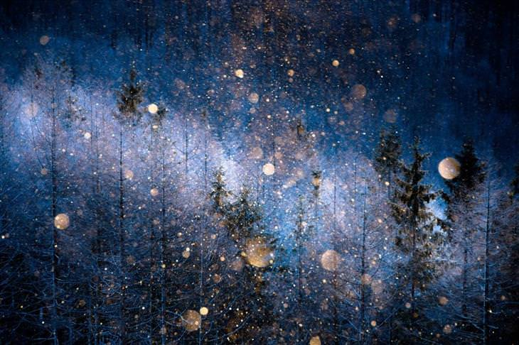 Sony, photography, nature, beautiful