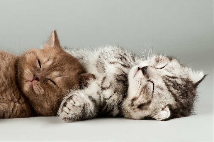 Cats - Wonder - Health