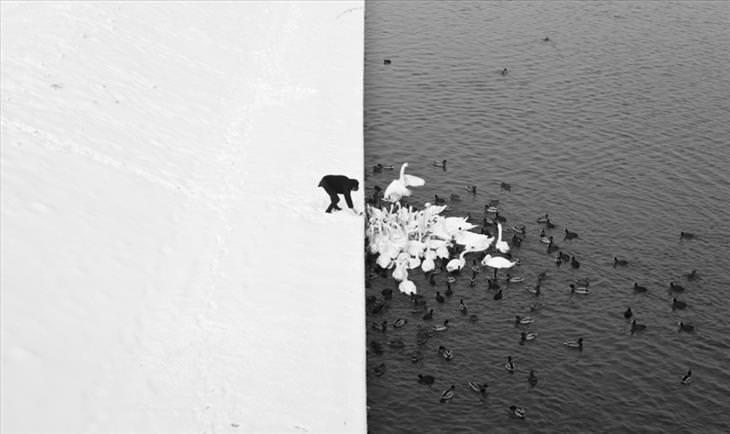 natureza, fotografia, incrível, real
