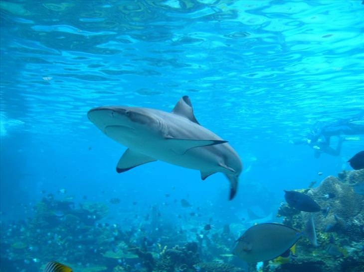Most dangerous animals: Shark