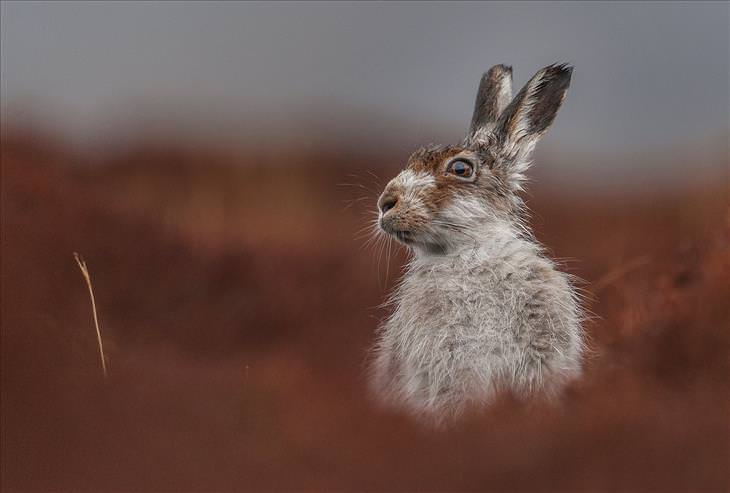 Britain's Wildlife Photos