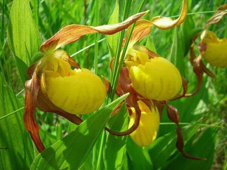 Stunning rare flowers