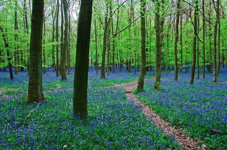 Nature is beautiful when its blue: Bluebells
