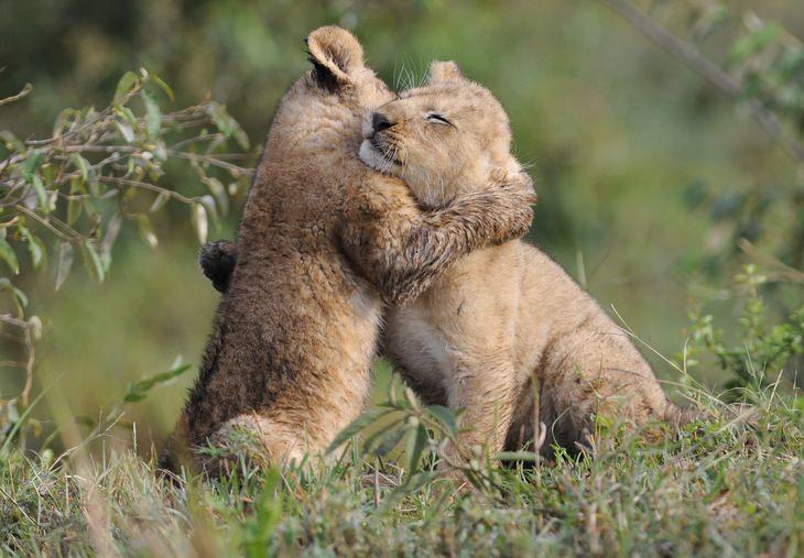 fond animals