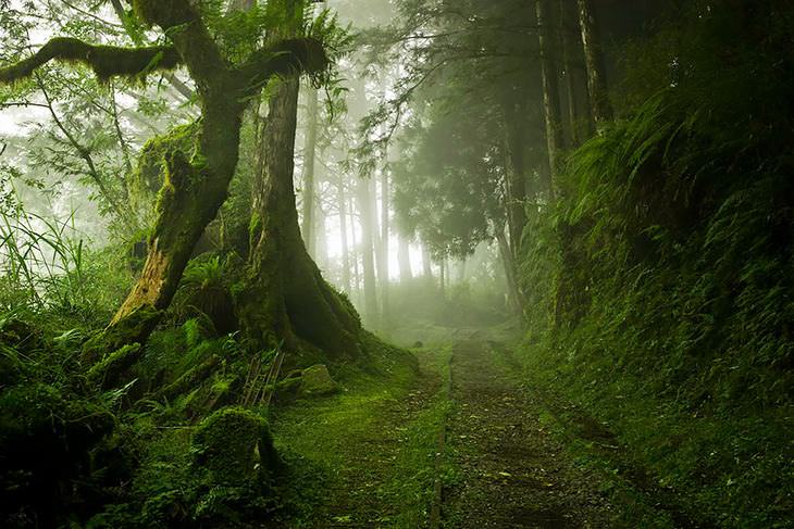 beautiful forests