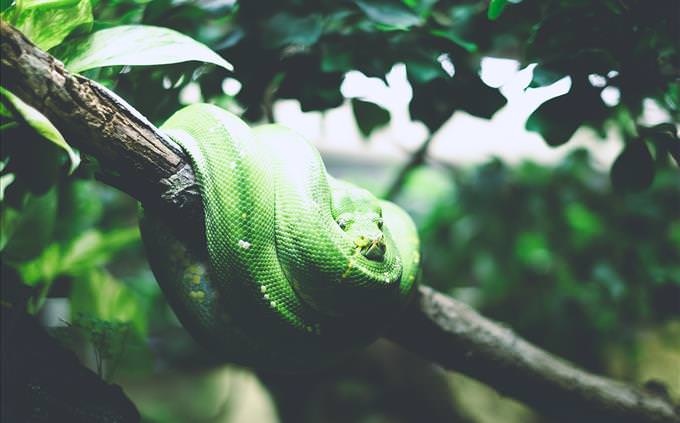green snake in tree