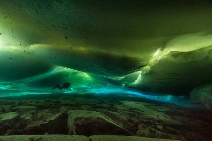 Antarctica dive