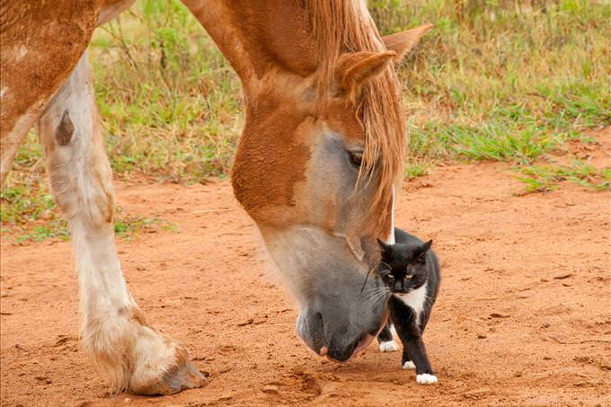 horse touching cat