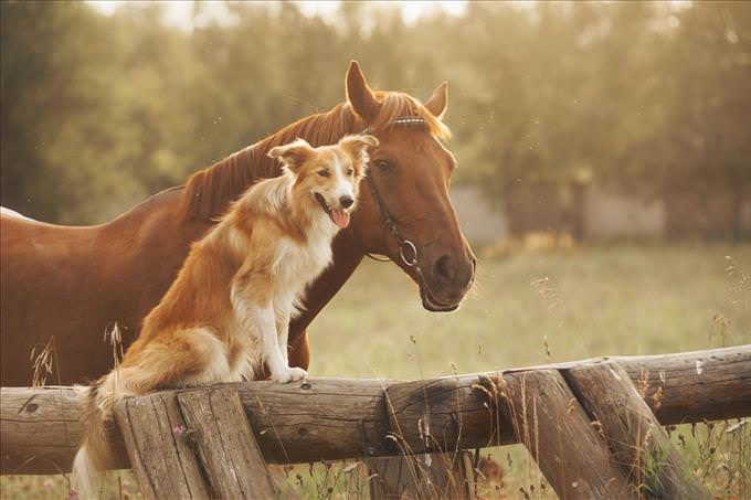 dog and horse in field