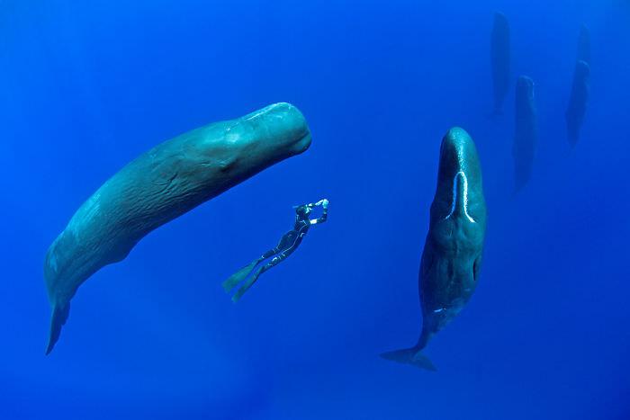 sleeping-whales