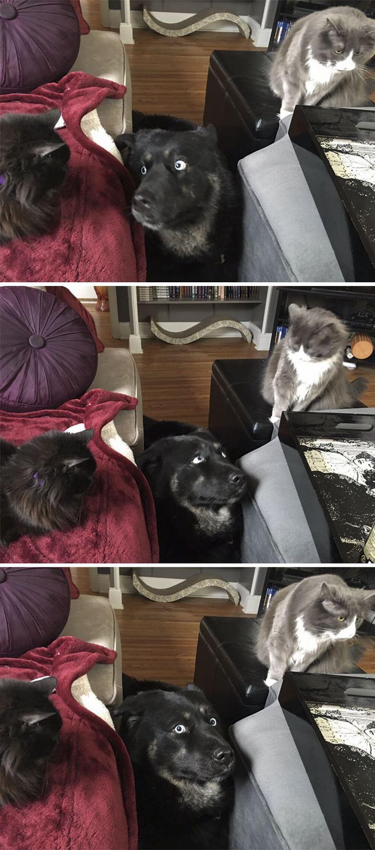 multiple-pets