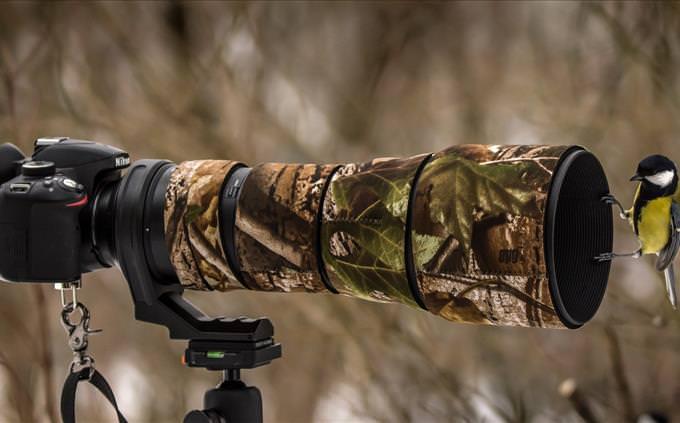 bird on camera lens