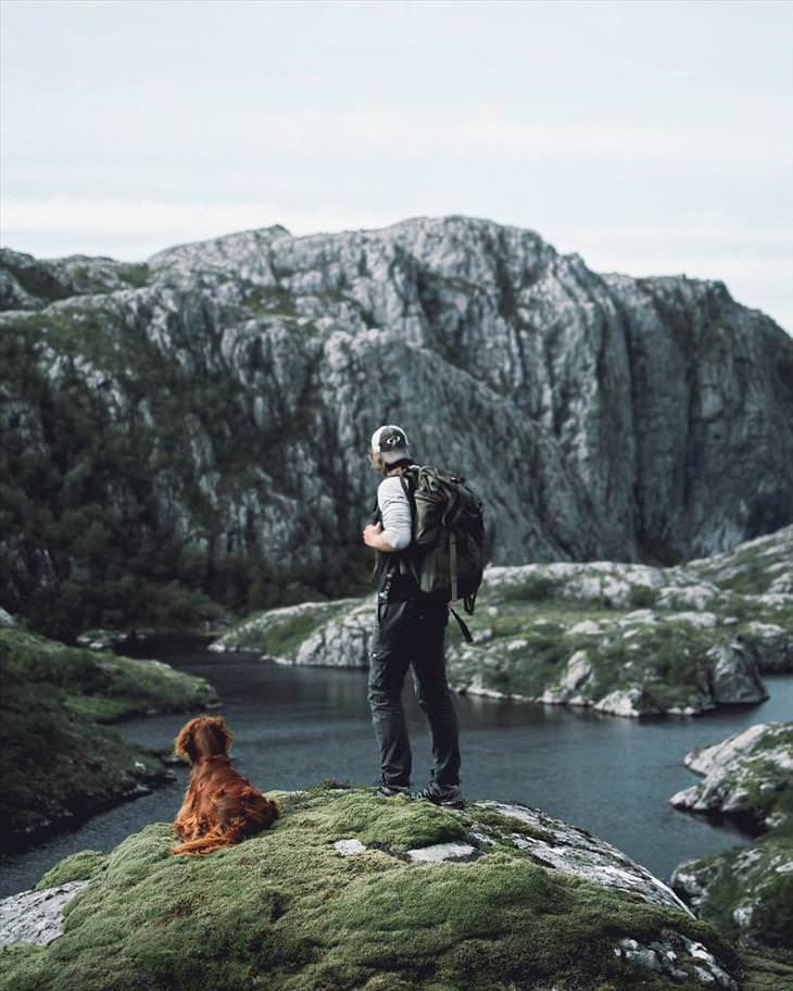 dog-in-norway