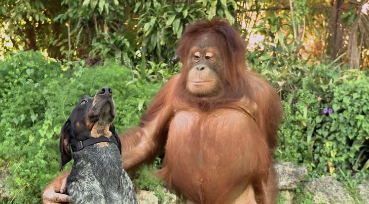 animals and lasting friendships
