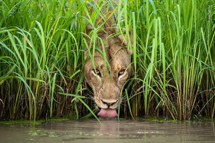 wildlife-photography-best-of