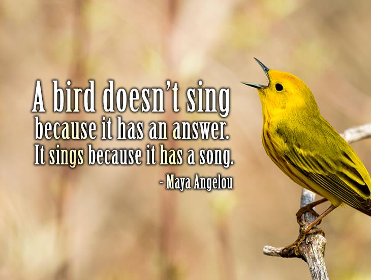 A Bird Doesn't Sign Because It Has Answers