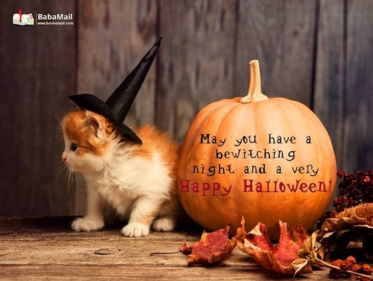 Wishing You a Bewitching Night and a Happy Halloween