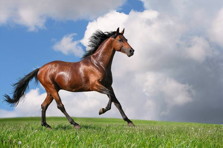 15-most-beautiful-horse-breeds